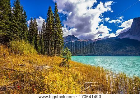 The smooth turquoise water among the yellowed autumn forest. Lake in the Rocky Mountains. The concept of eco-tourism and active recreation