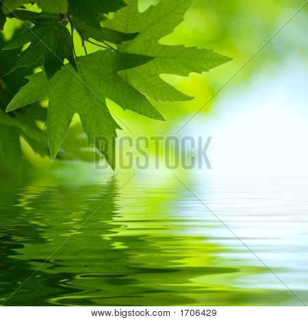 green leaves reflecting in the water shallow focus poster