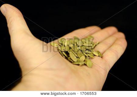 Pumpkin Seeds In Hand