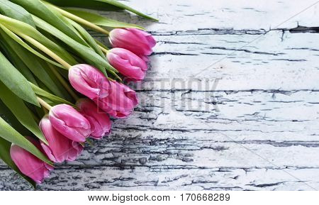 Flower bouquet of pink tulips on a white table or wooden planks. Spring background with copy space and pink spring flowers.