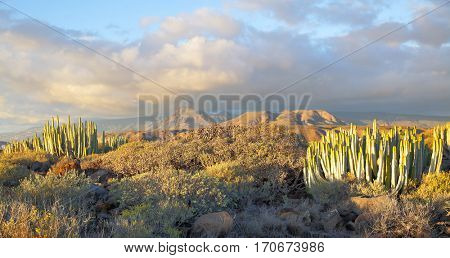 Beautiful panoramic view of desert with plants at sundown on Tenerife, Canary Islands