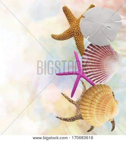 Sea Shells and Sea Stars Background