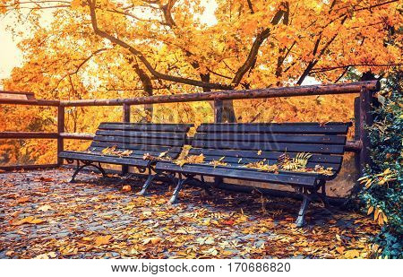 Autumnal landscape with wooden bench and yellow leaves