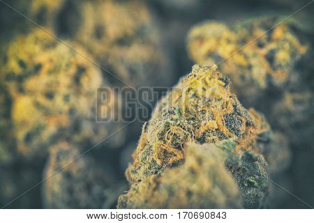 Macro detail of dried cannabis buds - medical marijuana concept background