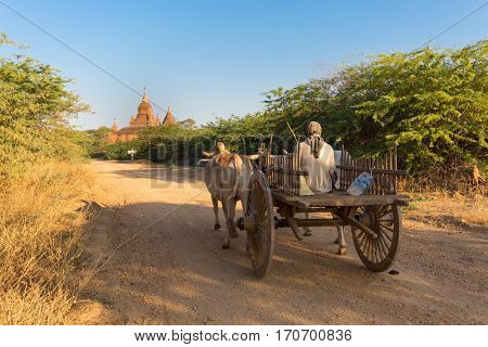 Horse cart running in a path leading to pagoda, Bagan, Myanmar