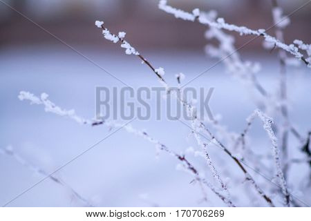 Detail of a branch covered with hoarfrost