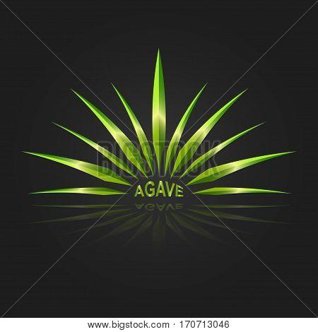 Agave logo vector design template on background