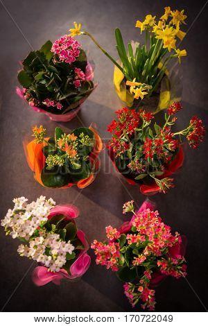 Close-up of plant pots arranged at flower shop