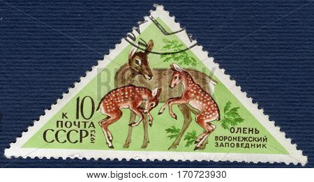 USSR - CIRCA 1973: Postage stamp printed in USSR shows deer (lat. Cervidae). The series