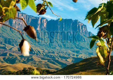Roraima table mountain with cotton tree in front, Great Savanna, Canaima National Park Venezuela