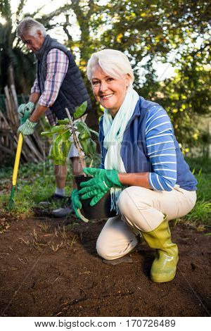 Portrait of happy female mature gardener with potted plant at organic garden