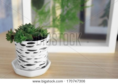 Succulent in white crock on blurred background