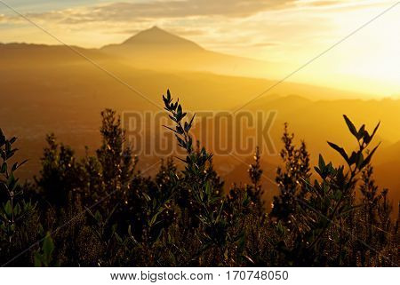 View on mount Teide or