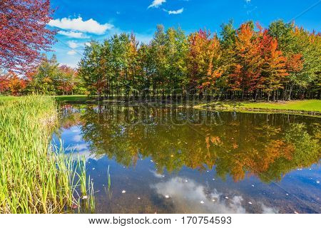 Concept of active tourism. Adorable oval pond in the beautiful park. Shining day in French Canada. Autumn foliage reflected in clear water of the pond