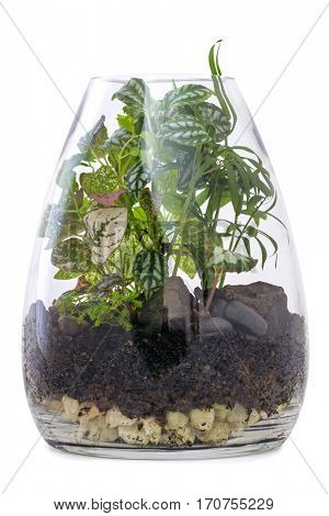 Terrarium Garden isolated on white. Modern glass vase.