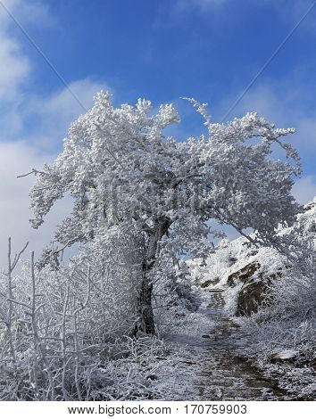 Beautiful tree covered with snow on a blue sky