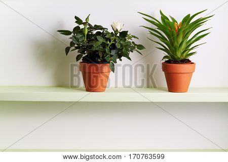 Potted plant on a shelf. Potted Miniature Rose and Bromelia Plant On Shelf.