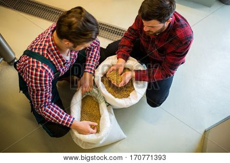 Brewers examining grains at brewery factory