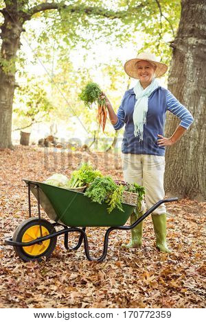 Portrait of confident mature female gardener with vegetables in wheelbarrow at botanical garden