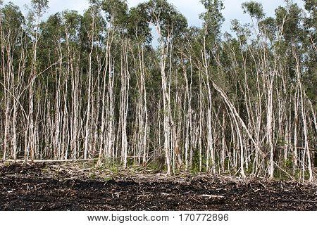 forest total trees destruction degradation damage wood