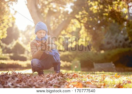 Boy holding autumn leaves while crouching at park