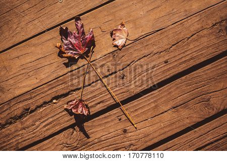 High angle view of autumn leaves on floorboard