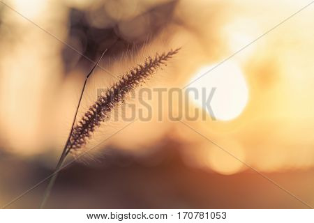 Abstract meadow background with grass in the meadow and sunset Vintage Warm tones. Selective focus.