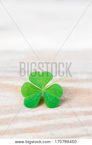 Close-up of three leaves shamrock on wooden table with copy space