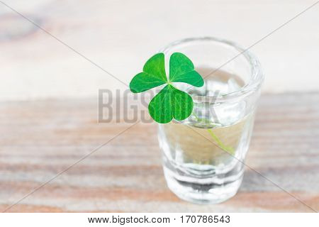 Close-up of shamrock in small drinking glass on wooden table with copy space
