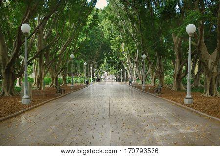 Avenue in Sydney Hyde Park