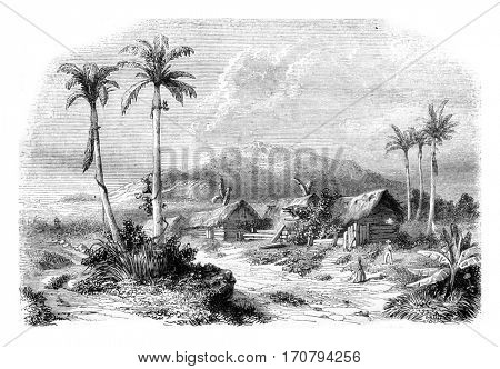 Landscape of Guadeloupe, from nature, vintage engraved illustration. Magasin Pittoresque 1846.