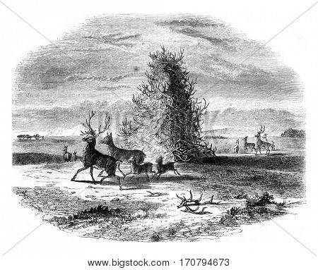 Pyramid staghorn in the upper Missouri, vintage engraved illustration. Magasin Pittoresque 1845.