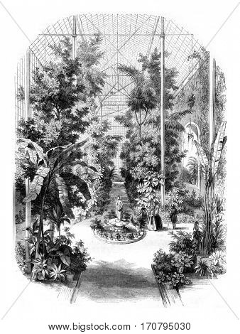 View taken in the greenhouses of the Jardin des Plantes in Paris, vintage engraved illustration. Magasin Pittoresque 1845.