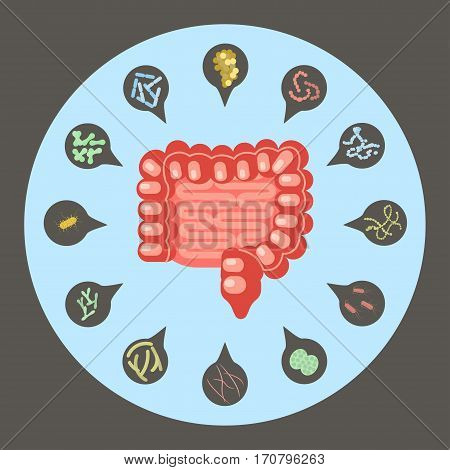 Intestinal flora, Set of good and bad enteric bacteria, Gut flora in flat design for infographic, vector illustration eps 10