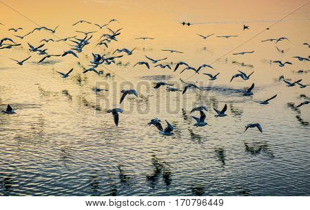 Seagulls flying over sea at sunset
