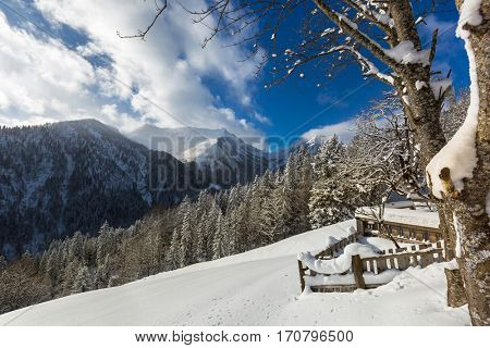 Partial view of stable, pine tree covered with now, mountain and blue sky during cold winter in Austria, Europe