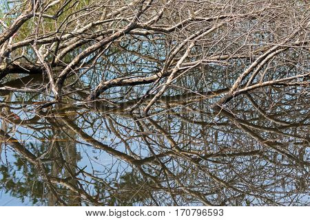 Brown tree branches submerging in water showing mirror reflection at Swamp flooded forest in Rayong, Thailand