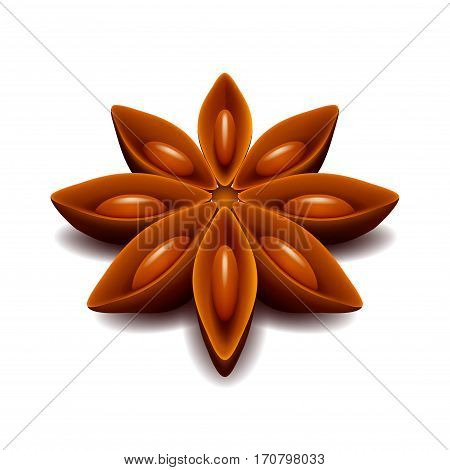 Star anise isolated on white photo-realistic vector illustration