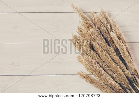 Autumn composition. Dried fluffy cattail or typha flower top view on white wood with copy space. Floral composition
