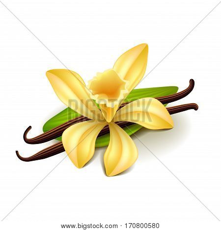 Vanilla isolated on white photo-realistic vector illustration