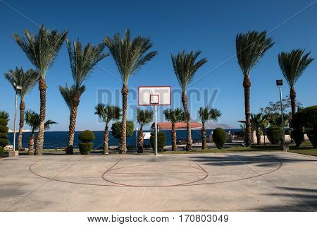 basketball backboard in the palms at the Red Sea