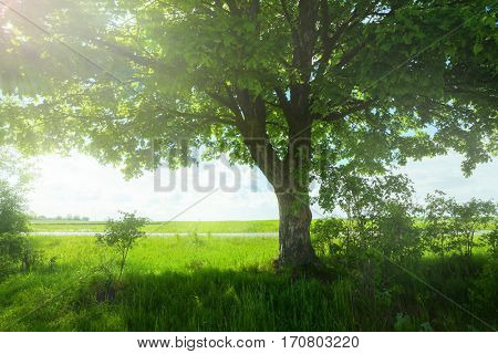 Landscape with tree on the green field