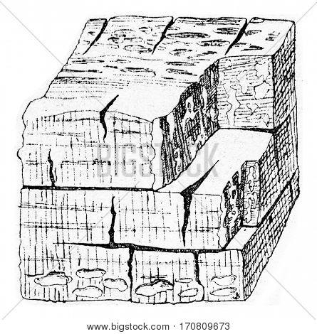Wood strongly attack the mycelium Polyporus Schweintizii, vintage engraved illustration.