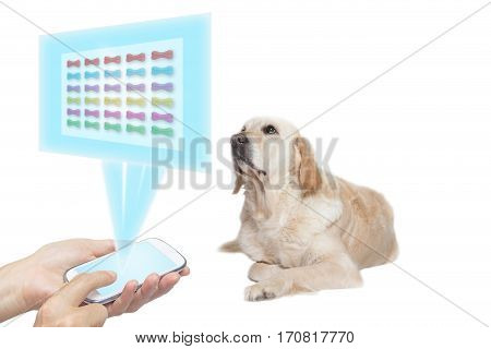 Golden Retriever Dog lying with its front paws crossed and is choosing from a colorful dog bones projected at a transparent rectangle based on the smart phone held by female hands in the bottom of the photo.