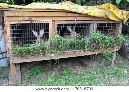 Small Rabbit Farming. Feeding Rabbits. Rabbit Cage