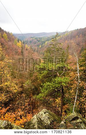 Colorful autumn scenery over Raci Udoli valley. Beautiful orange and yellow autumn forest.