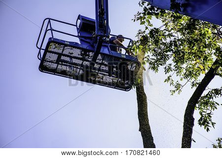 man on aerial platform cutting tree with chaisaw