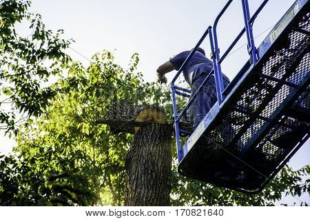man on aerial lift cutting tree with chainsaw