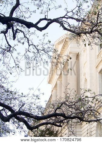 The stately white marble columned US Supreme Court Building in Washington DC is framed by bare branches of a cherry tree.