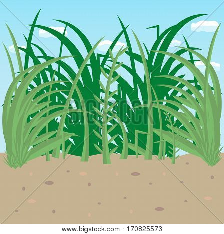 lawn on a background of blue sky. vector illustration